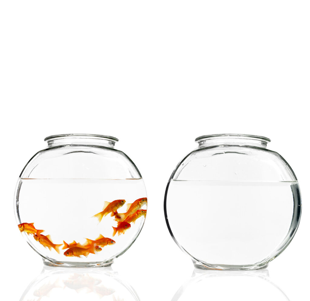 How Might A Goldfish Escape A Crowded Fishbowl?